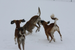Come PLAY with us...this was in 2010,sadly nowhere near this much snow now