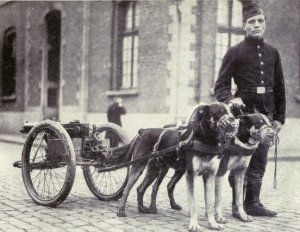 Belgian_dogs_trained_to_draw_quick-firing_guns